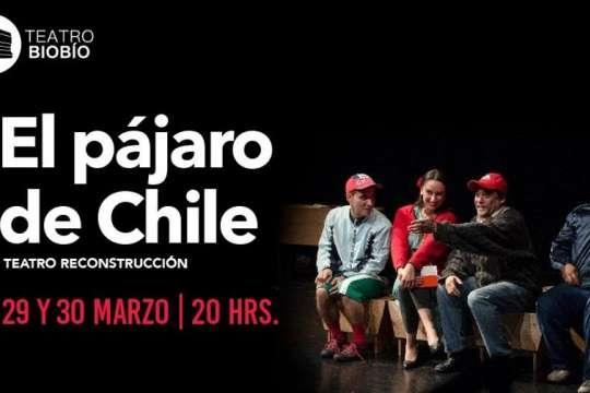 El Pájaro De Chile